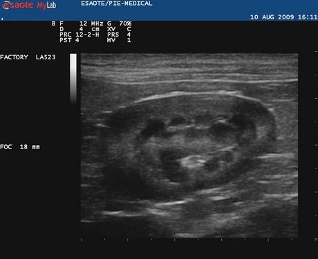 ultrasound green point veterinary hospital
